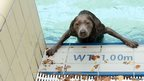 A dog looks out of a public swimming pool in Bamberg, southern Germany