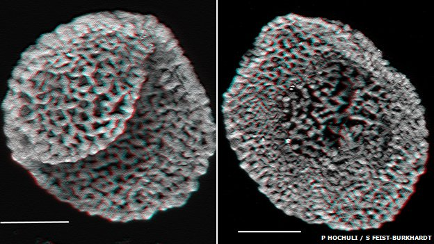 Confocal laser scanning microscopy of fossilised pollen from Middle Triassic sediment
