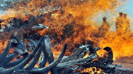 An illegal ivory stockpile goes up in smoke on 20 July 2011 at the Tsavo National Park in Kenya