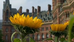 Flowers at St Pancras