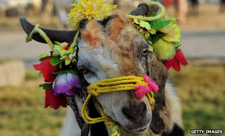 A decorated goat at a market before Eid in 2011