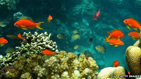 An underwater shot of some fish swimming near a coral reef