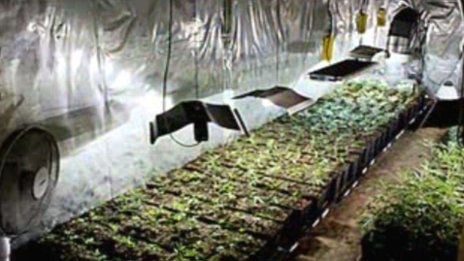 Cannabis farm in Haddenham, Cambridgeshire