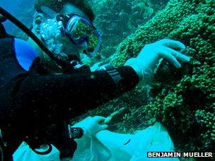 Jasper de Goeij sampling a coral reef