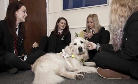 Hannah, guide dog and friends during break time