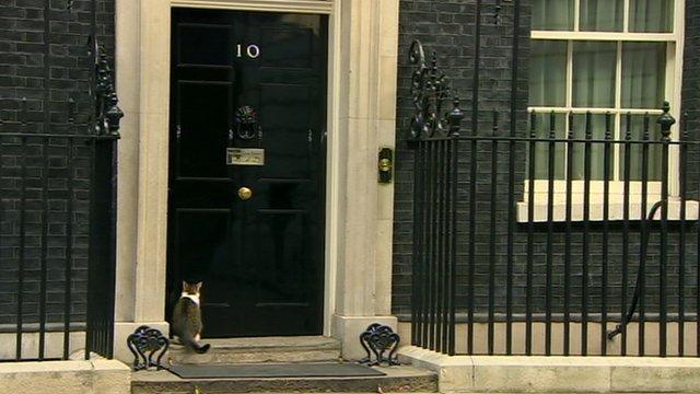 Cat sat on doorstep of Number 10