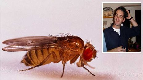 Drosophila and Dr Denholm