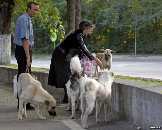 People feed stray dogs in Bucharest, 19 July
