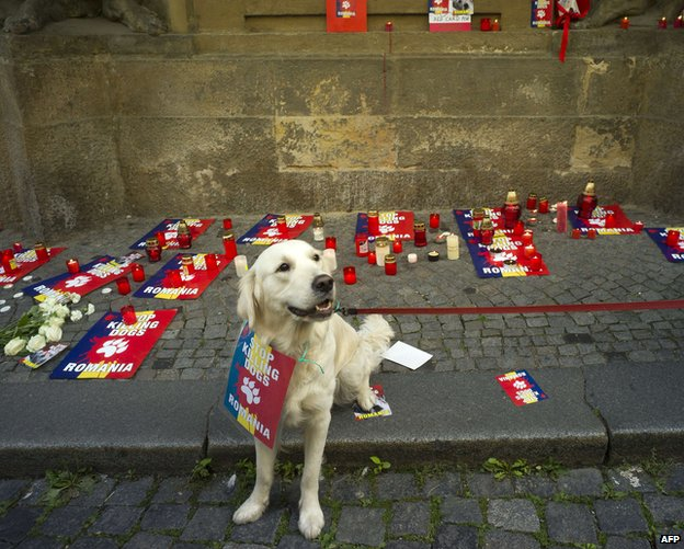 Dog at protest in Prague, 27 Sep 13