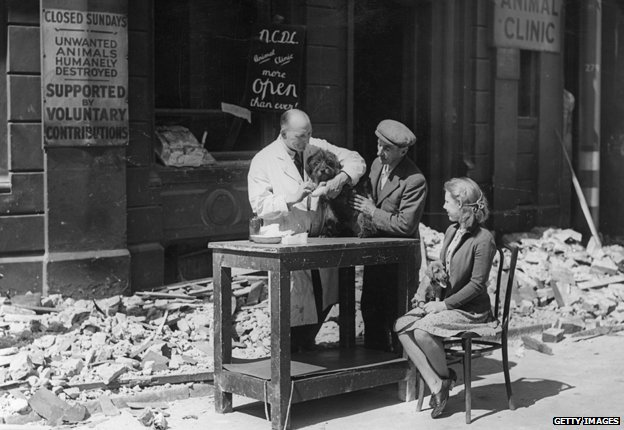 "A vet treats a dog outside after his premises are blown out by a bomb. A sign reads: ""Animals humanely destroyed"""