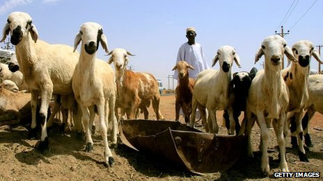 File image of sheep in Sudan in October 2012