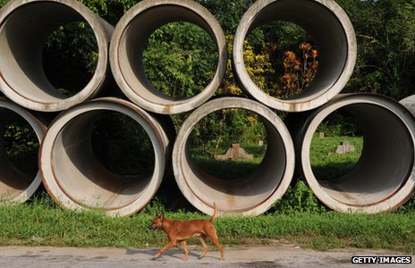 A dog walking past building material