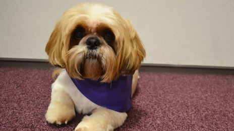 Jack the Shih Tzu from Bournemouth University