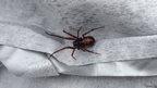 A spider discovered in Richmond, Surrey
