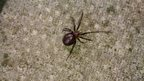 A spider on a paving slab found in Waringstown in County Down, Northern Ireland