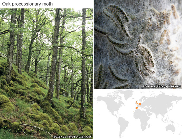 Oak trees, moth caterpillers and spread map