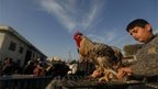 A rooster is put on display at a weekly bird market in Gaza City, 25 October 2013