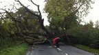 Tree fallen across road in Gloucestershire