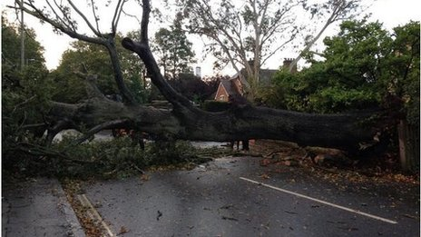 Fallen tree in Exeter