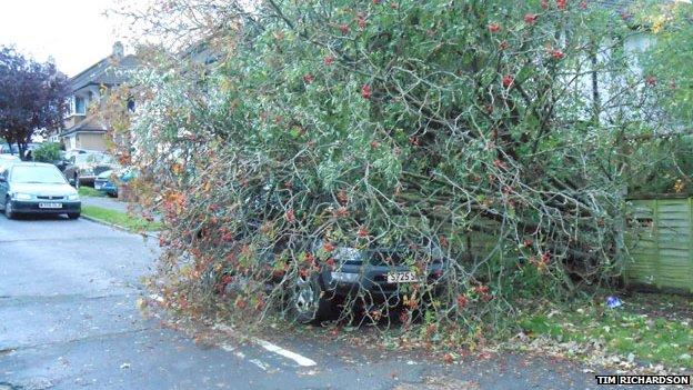 Tree fall in Tadworth, Surrey