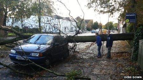 Fallen tree in Farnborough
