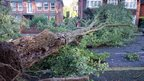 A huge tree has fallen across a road and into the front of two houses.