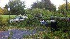 A large tree has fallen across two cars.