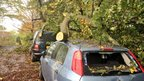Tree trunks on two cars, one with the back window smashed in.