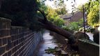 A tree has fallen on to a wall, across pavement.
