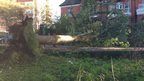 A large tree has fallen in a park.