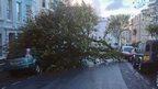 A tree has fallen across a road, landing on a car.