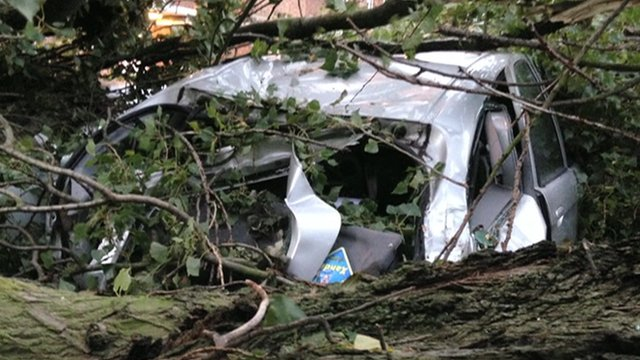 Car crushed under tree