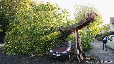 Hove: Fallen tree