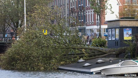 Tree on sunken houseboat, Amsterdam