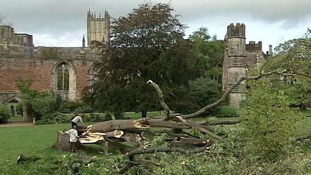 A 128-year-old Tree of Heaven split at the Bishop's Palace in Wells, Somerset