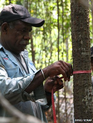 Member of a local community measuring the diameter of a tree (Image: DEGI/ICRAF)