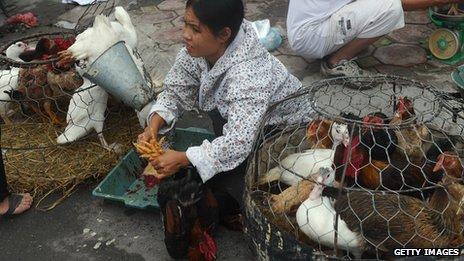 Live poultry market