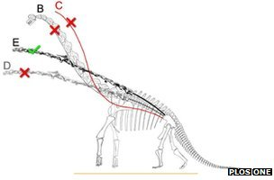 Diagram of a sauropod