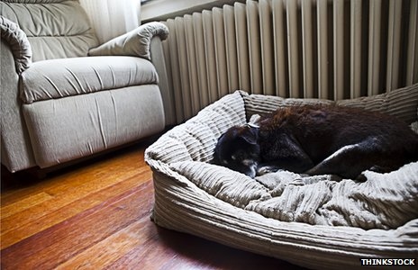 Dog in dog bed in front of radiator