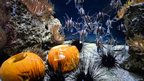 Fish swimming with pumpkins