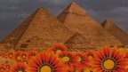 Egyptian pyramids with orange flowers in the foreground