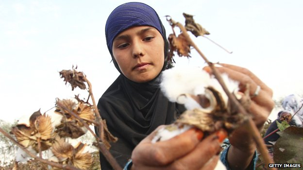 Cotton picker in Tajikistan