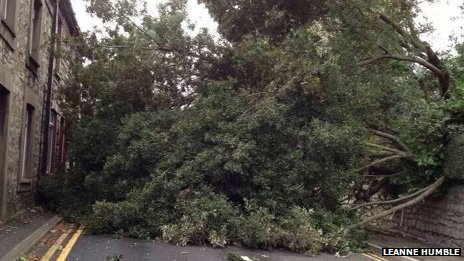Fallen tree, Bridgend
