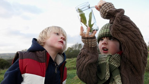 Children looking at leaves and insects collected in a glass jar