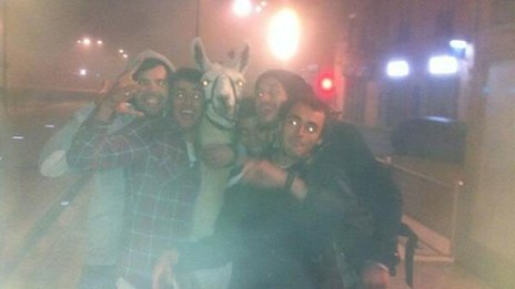 Serge the llama with the kidnappers