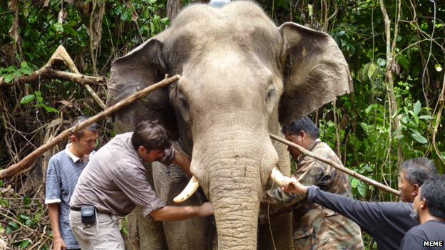 An elephant in Malaysia