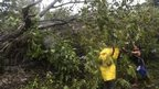 People clear trees