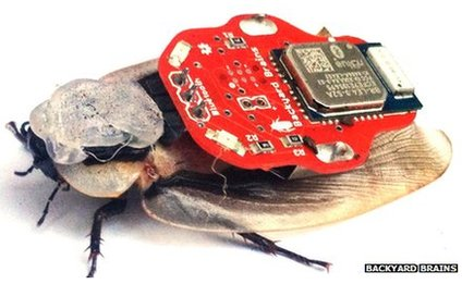 Cockroach wearing the 'electronic backpack'