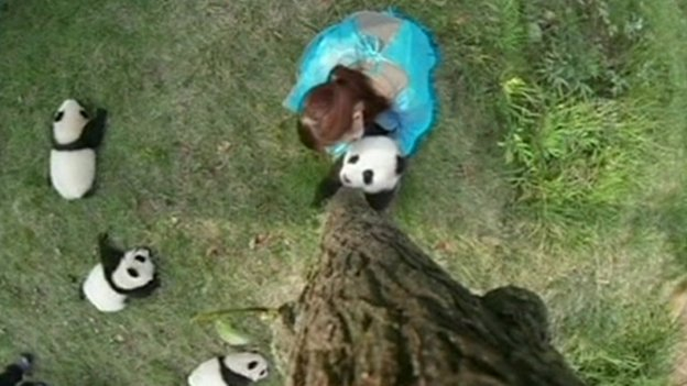 Woman helping a panda climb a tree