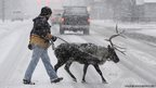 David Hall and Star the Reindeer take a walk in the snow in Anchorage